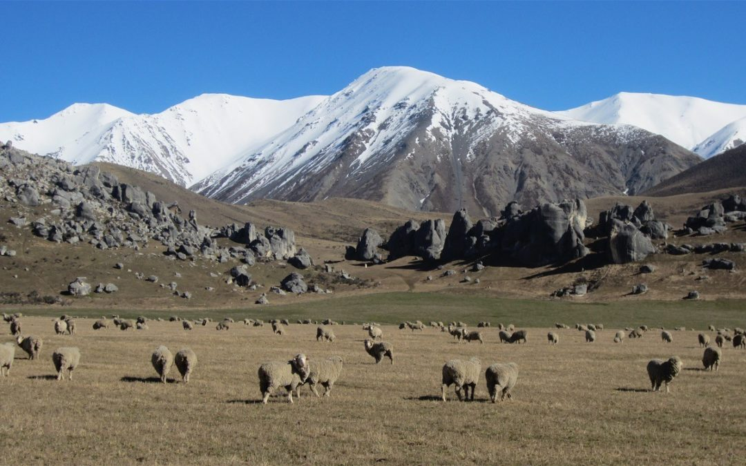 New Zealand Merino Tour: March – April 2017