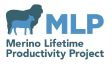 Merino Lifetime Productivity Project – Inspection & Field Day 15/03/2017