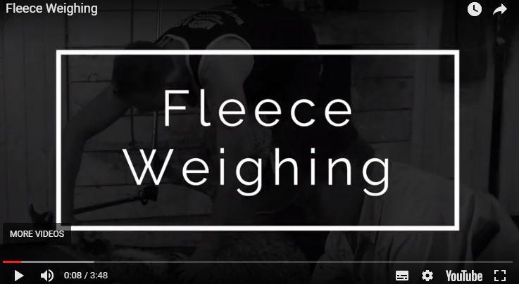 Benefits of Electronic Identification (eID) & Fleece Weighing