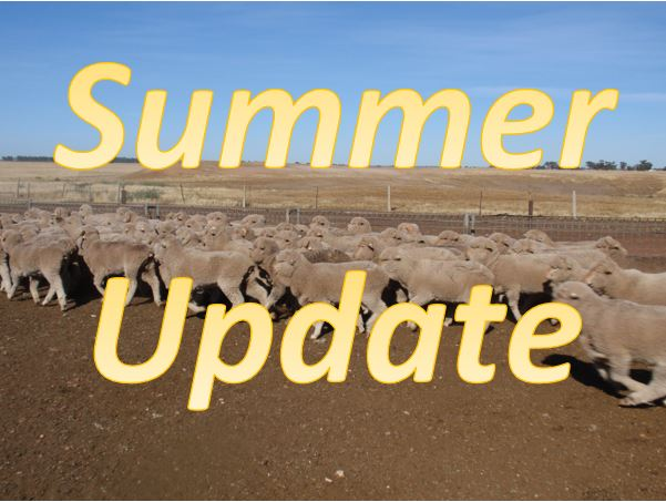 Wool Classer & Wool Grower Summer Update