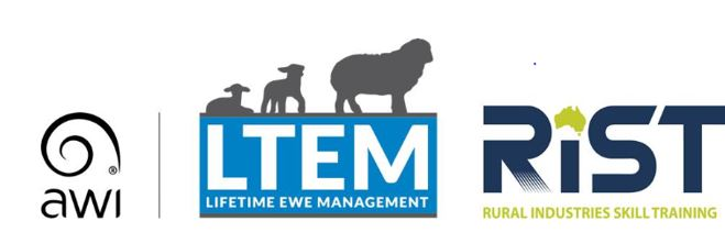 LIFETIME EWE MANAGEMENT - New South Wales