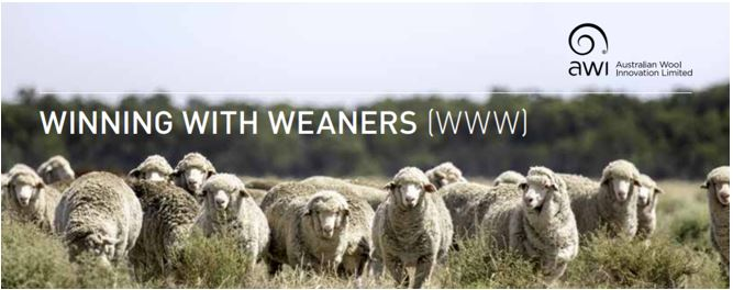 WINNING WITH WEANERS
