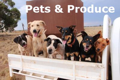 Pets & Produce