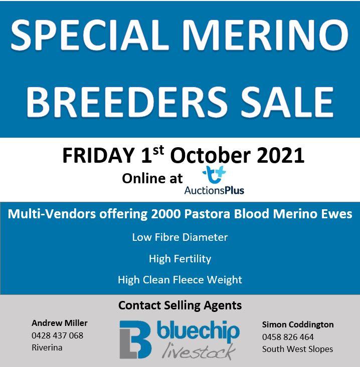 Merino Breeders Sale - AuctionsPlus @ AuctionsPlus